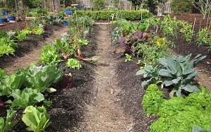 Как правильно организовать огород своими руками? Основные ошибки