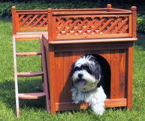 Можно ли содержать собаку в вольере или конуре?