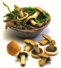 Можно ли кормить детей грибами?