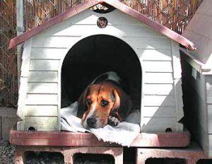 Можно ли использовать вольеры для собак?