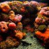 Значение камня коралл для человека, магическое и метафизические свойства