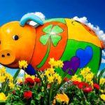 свинья на лужайке