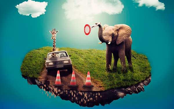 слон на острове