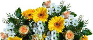 желтые и белые цветы