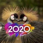 птички 2020