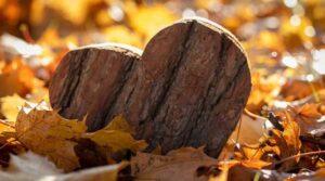 сердечко в осенних листьях